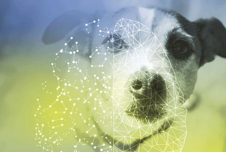 künstliche neuronale Netze / artificial neuronal networks